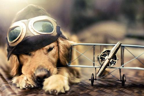 Quadro Dog and Plane