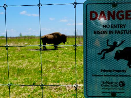Bison advice