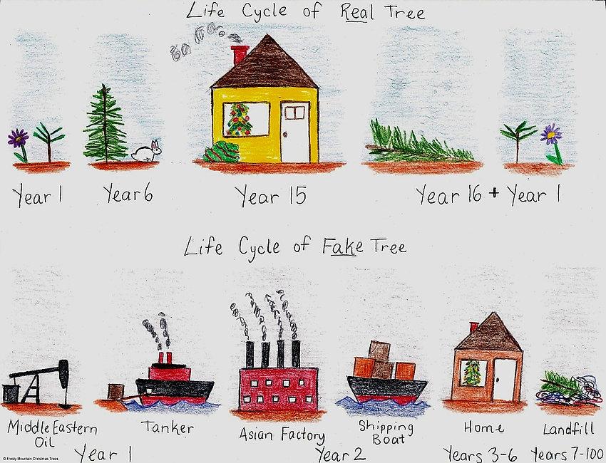 tree-life-cycle1024.jpg