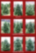 Christmas Tree grading examples