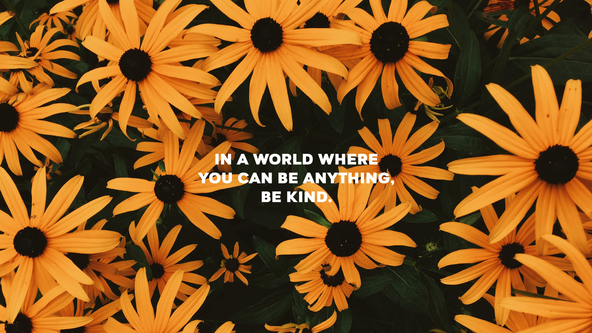 In a world where you can be anything_des