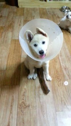DoVE-Project_rescue-dogs_145