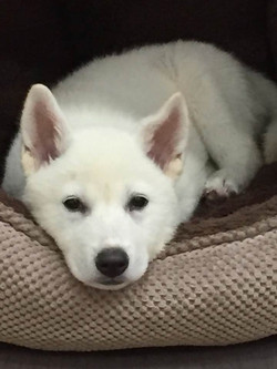 DoVE-Project_rescue-dogs_149