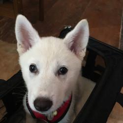 DoVE-Project_rescue-dogs_157