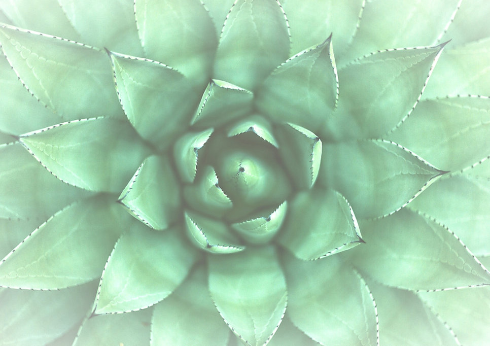 Green%2520Plant_edited_edited.jpg