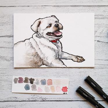 Small Dog Watercolour Portrait