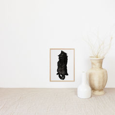 Black Cat on its back
