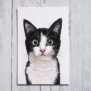Kitty Watercolour Portrait
