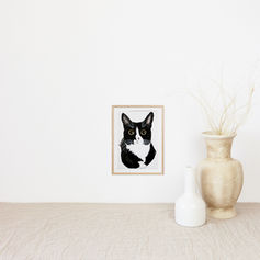 Big Eyed Cat Portrait