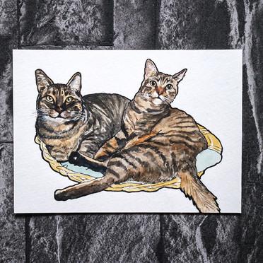 Cats Watercolour Portrait
