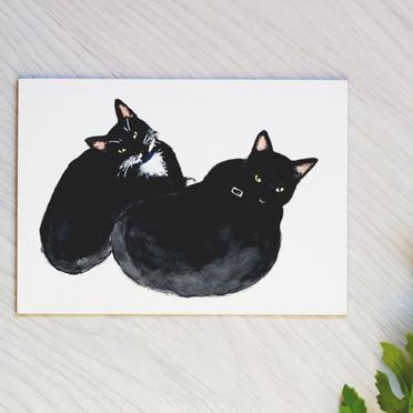 Cat Portraits