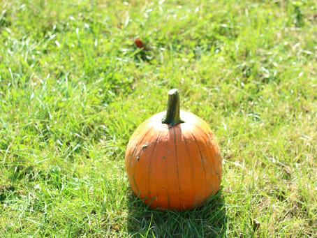 October, Wedding and Pumpkins.