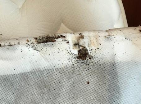Idées et solution de contre la punaise de lit à Antibes