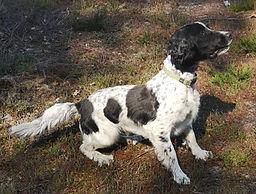 Détection canine.jpg