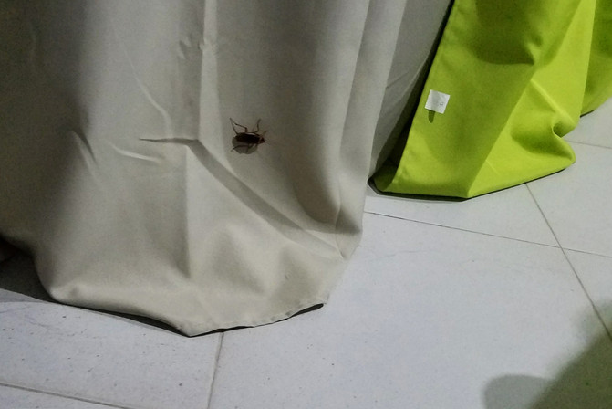 Cockroach in the apartment