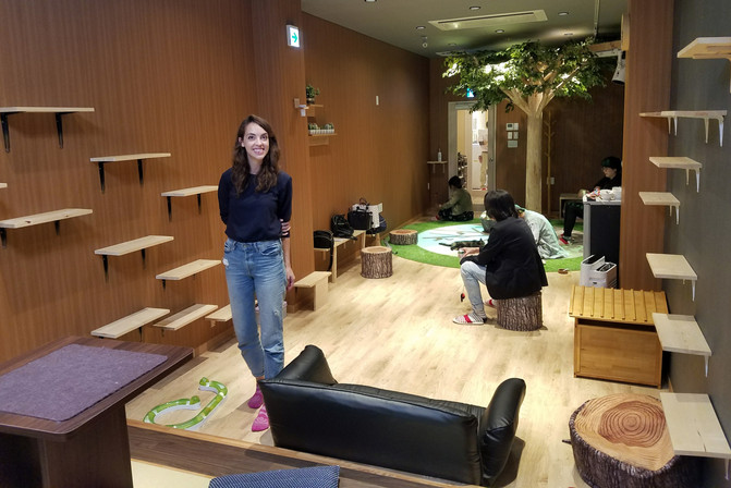 At the cat cafe, where we spent an hour or so trying to get the cats to pay attention to us