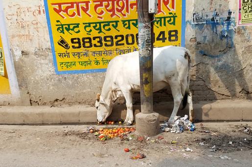 20170924-42_Varanasi-111.jpg