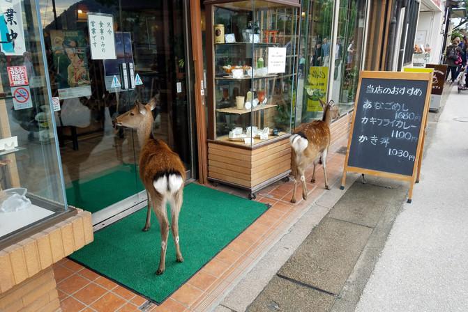 More tame deer