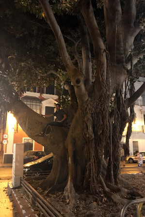 We had tapas for dinner at a restaurant in this square. Of course Brandon had to climb the tree.