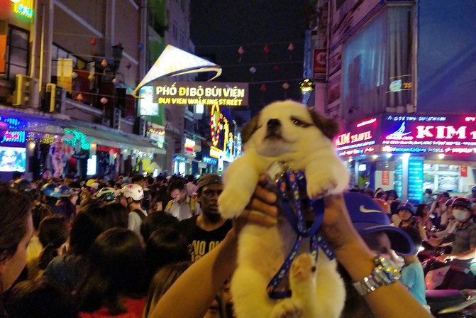 A puppy being held above the crowd to protect it from getting smashed