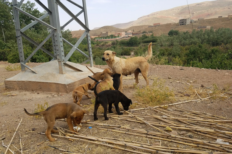 I don't have pictures of the cafe our van stopped at on the way from Merzouga to Marrakech, but I do remember that Brandon and I each ordered spaghetti. We were so. sick. of tagine. Also these puppies were there.