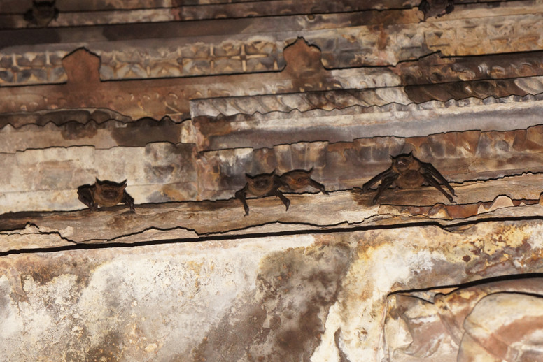 Bats inside one of the tombs