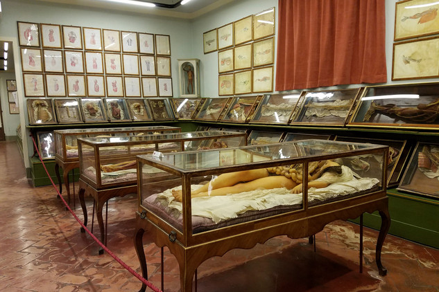 La Specola's main attraction: wax anatomical models from the 17th century. Apparently medical students still visit to see them.