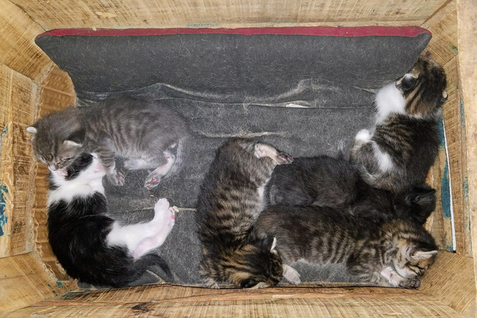 More street kittens