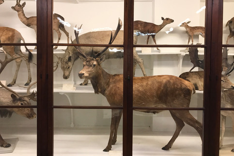 The crazy thing about visiting a museum full of 18th-century taxidermy is knowing that a lot of these species are probably extinct.