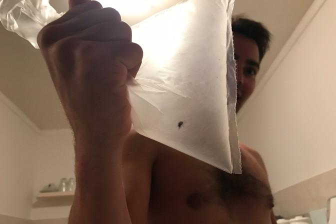 Brandon caught a bug in a bag.