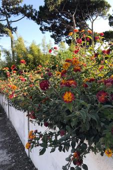 Flowers everywhere!