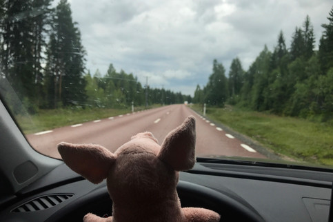 Travel Pig likes to drive, too.