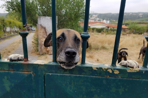 Martin's dogs greeting us at the gate