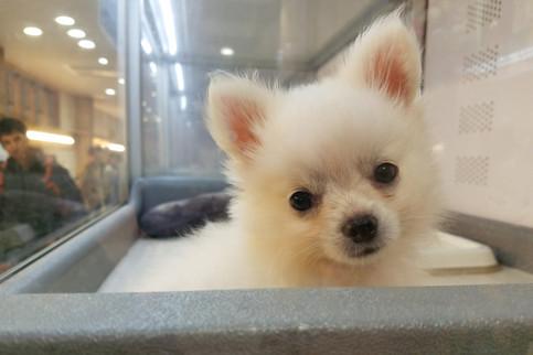 omg tiny puppy