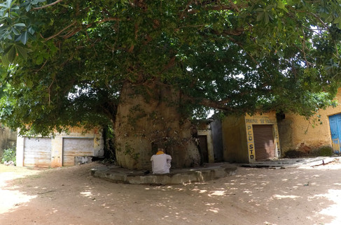 We found this giant tree by wandering down an alley.
