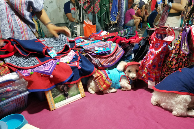 The night market is crazy cool. This stall sold dog outfits.