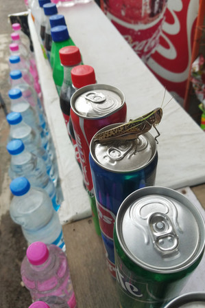 Bug on a soda can. At this point, we had learned from Yusuf that there were a few brands of bottled water we couldn't trust. We looked for Dasani and one or two others.