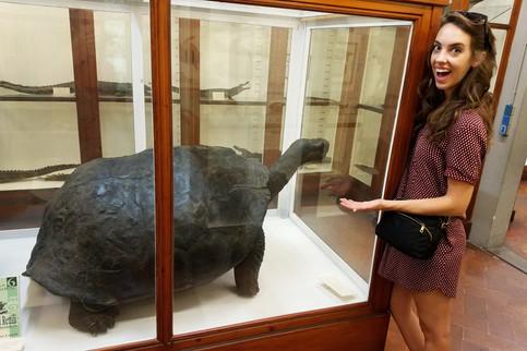 An ancient Galapagos tortoise