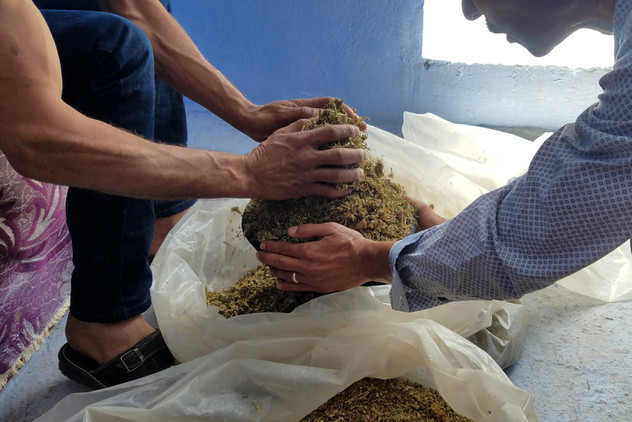 Then the farmer and the tour guide demonstrated how hash resin is separated from the rest of the plant — there's a lot of sifting involved, and later a pair of pantyhose and drumsticks.