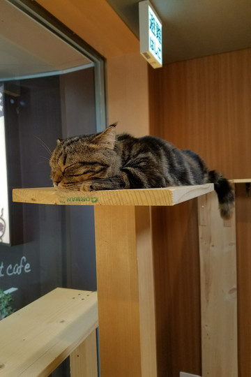 This cat was NOT having it. He stayed on the higher shelves, so we named him Top Cat.