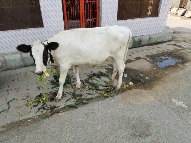 20170923-42_Varanasi-8.jpg
