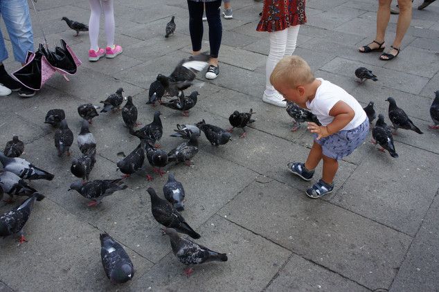 This kid was taunting the pigeons in Piazza San Marco.