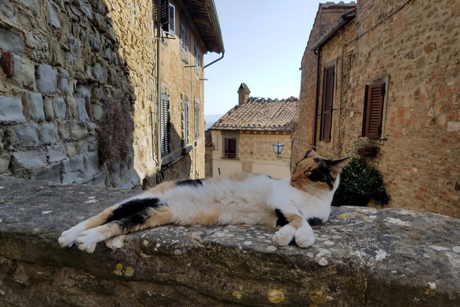 The UGA students have an Instagram account where they post photos of the cats in Cortona.
