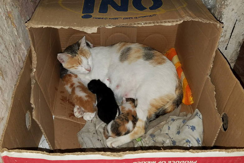 Fave box kitties