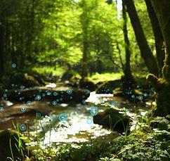 HowItworks-Ion-in-woods.jpg