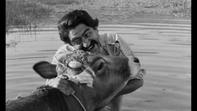 İnek- The Cow 1959