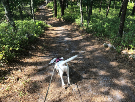 Take Your Dog for a Hike