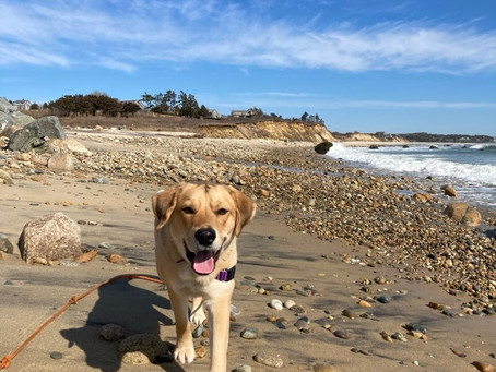Dog-Friendly Travel Guide to Martha's Vineyard