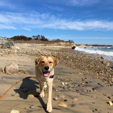 Dog-Friendly Travel Guide to Martha's Vineyard