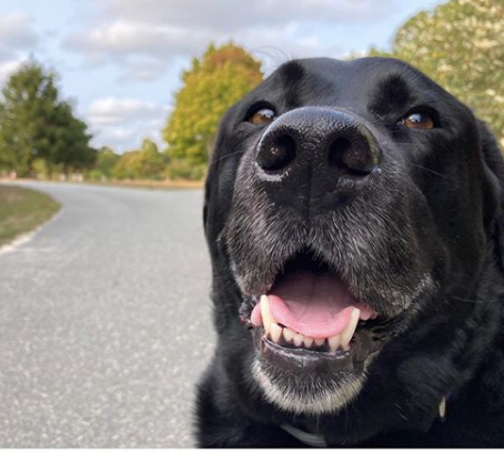 Martha's Vineyard Pet Owner Resources
